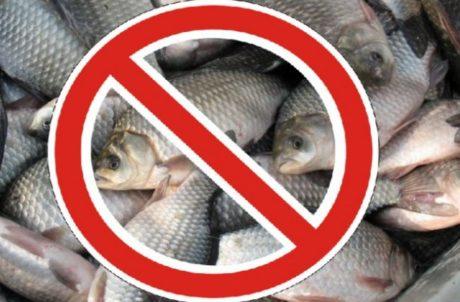 До уваги рибалок! З квітня по червень на Львівщині – період охорони нерестуючої риби